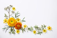 Yellow ranunculus on white background. Flat lay Stock Photo