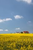 Yellow rape field and farmhouses Stock Photography