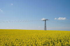 Yellow rape field and High-voltage power lines. Blue sky with clouds Royalty Free Stock Image