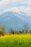 Yellow rape field and a mountain Stock Photos