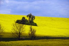 Yellow rape field Stock Photography