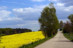 Yellow rape field Stock Photography