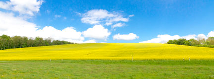 Yellow rape field in spring Stock Photos