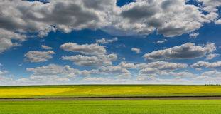 Yellow rape field under nice clouds in blue sky. Yellow rape field under nice clouds in blue sky Royalty Free Stock Photo