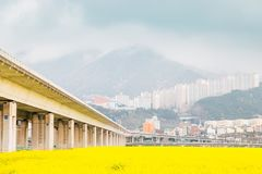 Yellow flower field at Daejeo Ecological Park, Busan, Korea. Yellow flower field at Daejeo Ecological Park in Busan, Korea stock photo