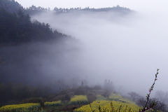 Rape in the fog. Yellow rape and pink of the peach blossom in the spring on the hillside, hill, road and village obstructed by fog Royalty Free Stock Images