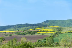 Yellow rape seed field in Bulgaria Royalty Free Stock Photography