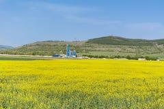 Yellow rape seed field in Bulgaria Stock Images