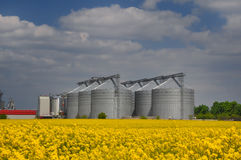 Yellow seed field with silos stock photo