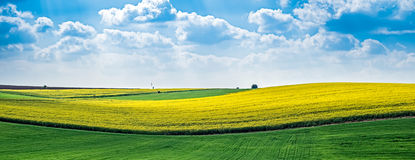 Yellow rapeseed field. Against the blue cloudy sky royalty free stock photography