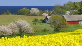 Yellow rapeseed field against stock video footage