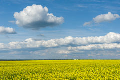 Yellow rapeseed field and blue sky,  beautiful spring landscape Stock Image