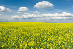 Yellow rapeseed field and blue sky, beautiful spring landscape Stock Photography
