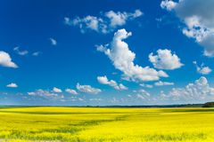Yellow rapeseed field and clouds Stock Photography