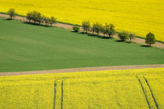 Yellow rapeseed field with green field and trees. On South Moravia, Czech Republic Stock Photography