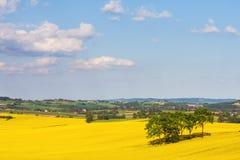 Yellow rapeseed field Stock Photos