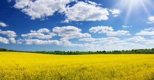 Rapeseed field panorama with beautiul sky. Yellow rapeseed field panorama with beautiul sky Royalty Free Stock Photo