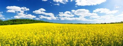Rapeseed field panorama with beautiul sky. Yellow rapeseed field panorama with beautiul sky Stock Photography