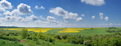 Yellow rapeseed field. Summer landscape. Royalty Free Stock Photo