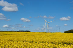 Yellow rapeseed field under a blue sky and white clouds. Yellow rapeseed field and wind turbines under a blue sky and white clouds Royalty Free Stock Image
