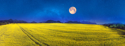 Yellow rapeseed field under a bright Royalty Free Stock Photography