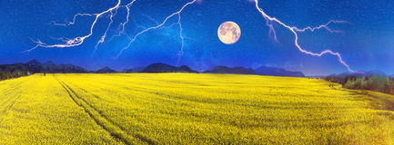 Yellow rapeseed field under a bright stock photo