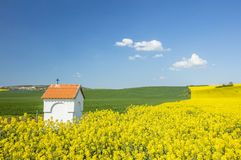 Yellow rapeseed field and white chapel under sky Stock Photos