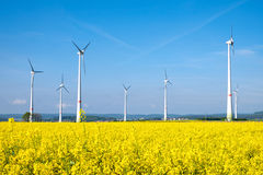 Yellow rapeseed field and windwheels Royalty Free Stock Photo