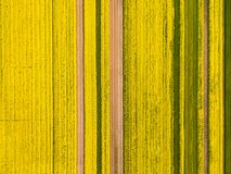 Yellow rapeseed flower field in spring. A bird`s eye view of rapeseed flower field, spring landscape of natural texture background Royalty Free Stock Photography