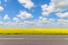 Yellow Rapeseed Flowers Field With Blue Sky Stock Photos