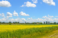 Yellow rapeseed flowers. On field with blue sky, clouds and forest, Quebec, Canada stock images