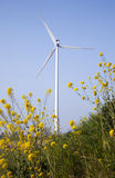 Yellow rapeseed and wind turbine against blue sky Stock Images