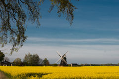 Yellow raps field with windmill Royalty Free Stock Image