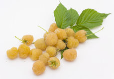 Yellow raspberry Stock Image