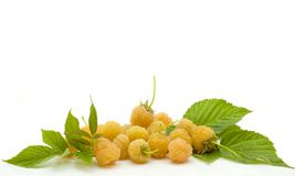 Yellow raspberry Stock Photography