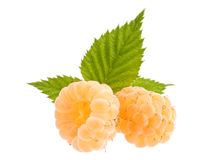 Yellow raspberry Royalty Free Stock Photo