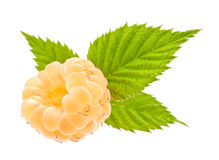 Yellow raspberry Stock Images