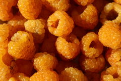 Yellow raspberry. A lot of ripe fruit yellow raspberry close-up Stock Images