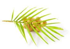 Yellow raw dates Royalty Free Stock Image