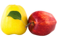 Yellow and red apple with green leaf Royalty Free Stock Image