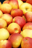 Yellow and red apples Stock Photo