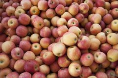 Yellow-Red Apples Royalty Free Stock Photography