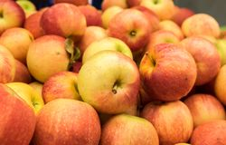 Yellow red apples for sale at city market. New yellow red apples for sale at city market stock image