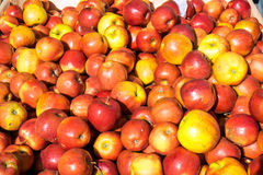 Yellow and red apples for sale Stock Photography