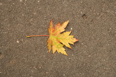 Yellow-red autumn leaf Royalty Free Stock Photo