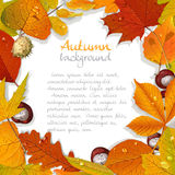 Yellow and red autumn leaves and chestnut background for your te Stock Photo