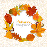 Yellow and red autumn leaves wreath background Royalty Free Stock Image