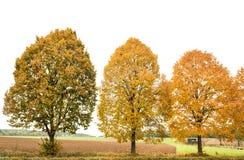 Yellow red autumnal trees. Autumn landscape Stock Photos