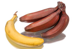 Yellow and red bananas Stock Photography