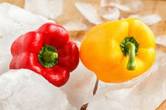 Yellow and red bell pepper with ice. Closeup stock image